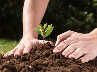 Over 5,000 students plant trees for 'chariTREE' in Dubai
